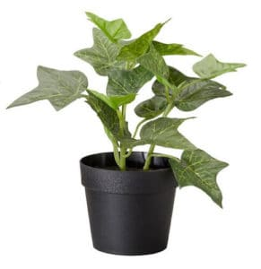 Top 10 Best Indoor Plants for Air Purification In India 2
