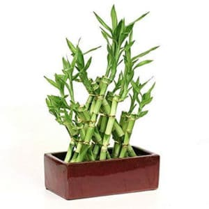 Top 10 Best Indoor Plants for Air Purification In India 8